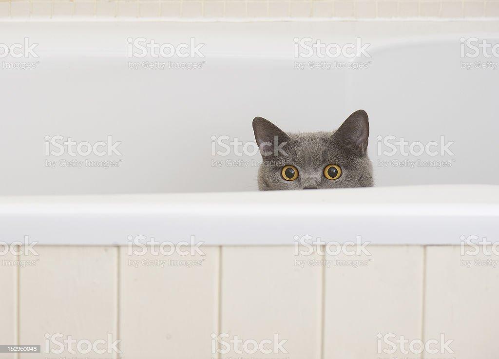 Chat dans la salle de bains - Photo
