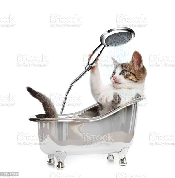 Cat in a bathtube with the shower picture id926715308?b=1&k=6&m=926715308&s=612x612&h=qsdr6mgsva2lryztnqugfpie5f6cvly s2qvopffv1i=