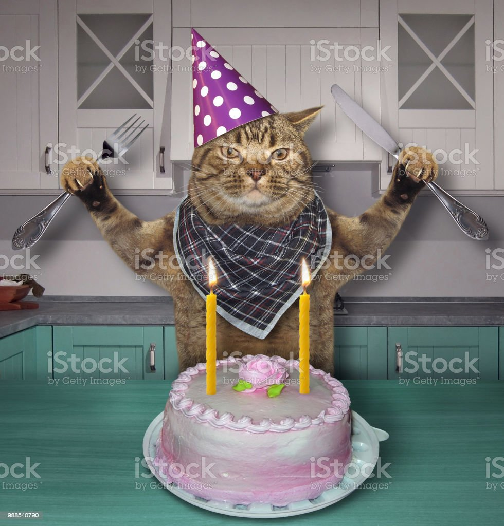 Cat In A Birthday Hat With The Cake Stock Photo More Pictures Of