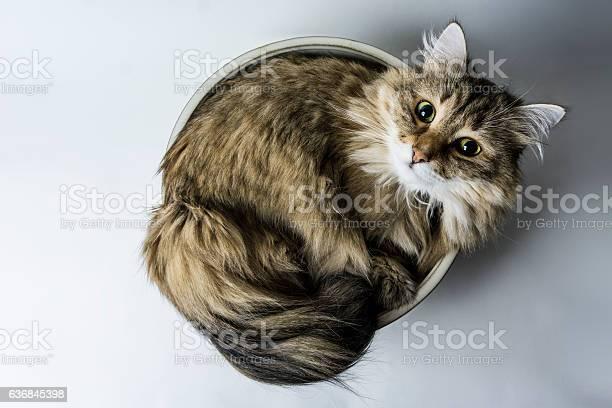 Cat in a bowl picture id636845398?b=1&k=6&m=636845398&s=612x612&h=new7byqbvijzarqj9x7a7ckwmoiuwsth1sat riupow=
