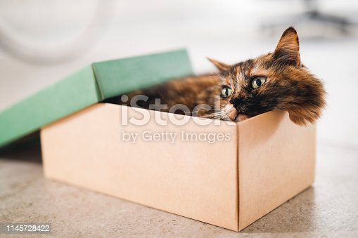 A tortoiseshell cat sitting in a small shoe box