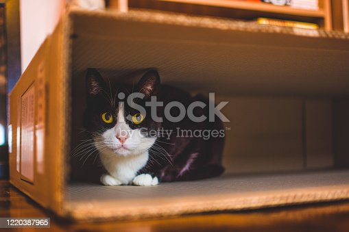 Black and white cat hiding in a medium size cardboard box.