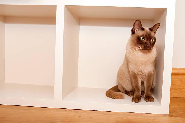 katze in einer box - katzenschrank stock-fotos und bilder