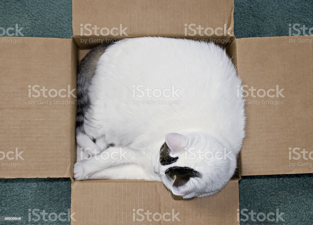 Cat in A Box royalty-free stock photo