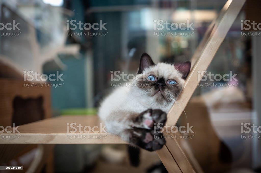 Eine Katze in einem Café in Tainan, Taiwan. – Foto