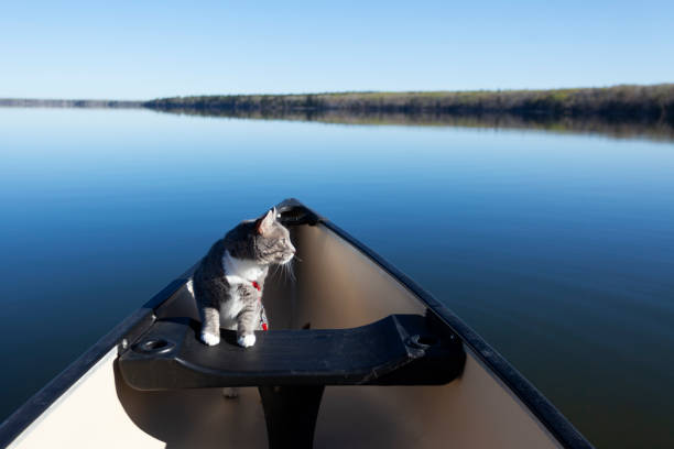 Cat In A Canoe Prince Albert National Park Saskatchewan Canada stock photo