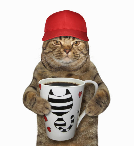 Cat in a cap holds a cup with coffee stock photo