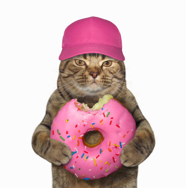 Cat in a cap with a pink bitten donut stock photo