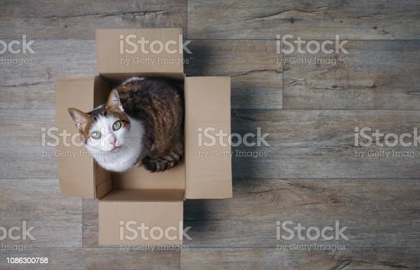Cat in a cardboard box looking curious up to the camera high angle picture id1086300758?b=1&k=6&m=1086300758&s=612x612&h=d8ec4aievgx7axeykebufqaaoxddrarjqidypdbbsnc=