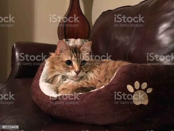 Cat in a cat bed picture id821124476?b=1&k=6&m=821124476&s=612x612&h=im5ilbih wrg vw3lne8unwdhzyqso19 v9td6pkpyy=