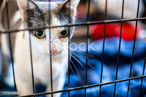 Cat in a Crate for Evacuation or Rescue - Family Pets Need Evacuation in Grass Valley, CA, United States