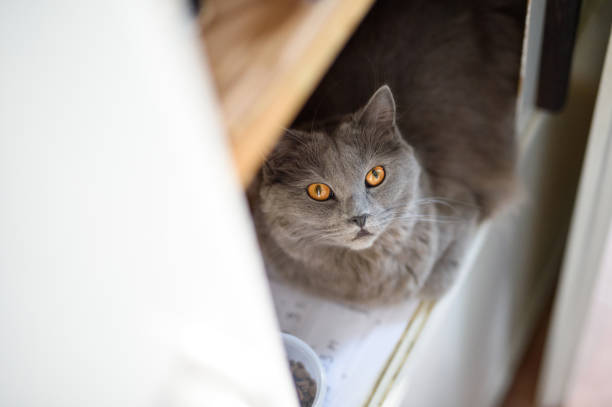 katze in einem schrank - katzenschrank stock-fotos und bilder