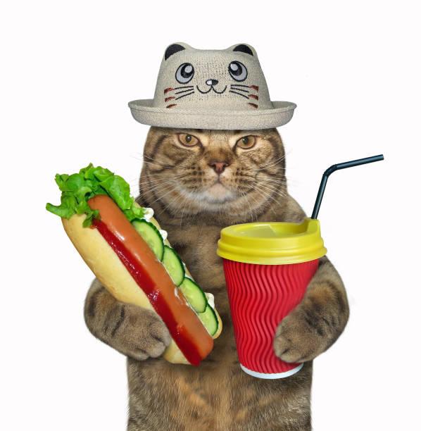 Cat in a funny hat with a hot dog 2 picture id1087144316?b=1&k=6&m=1087144316&s=612x612&w=0&h=a5 iqy8derb9m6dlnlc8rj zevgkdmrutteqbgzzgn4=