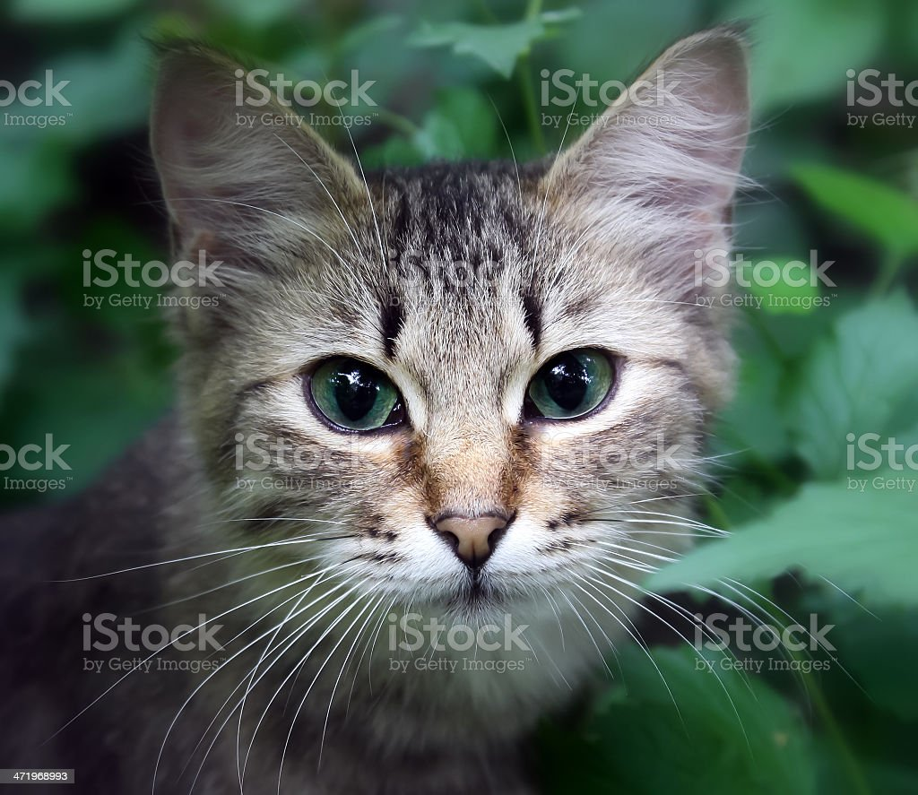cat in a grass royalty-free stock photo
