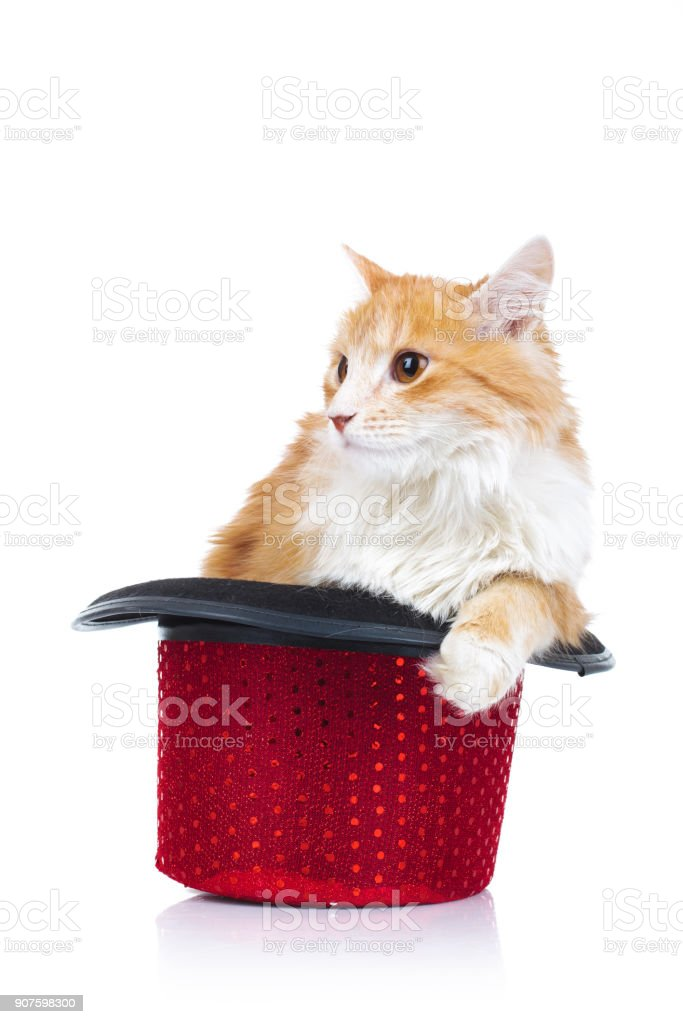 cat in a hat looks to side stock photo