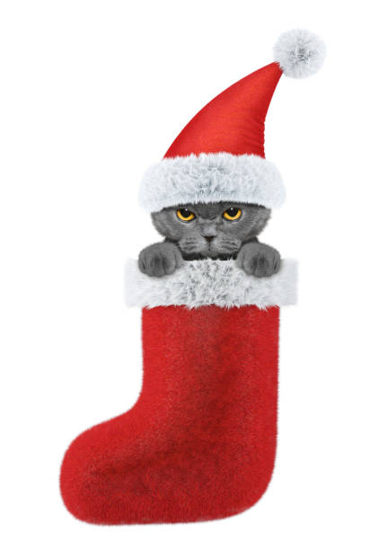 Cat in a hat of santa claus in stocking isolated on white picture id881591598?b=1&k=6&m=881591598&s=612x612&w=0&h=flqjz0e8td6r6rthuaksgeja6itcr7llft4rw32t2ma=