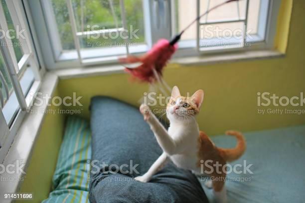 Cat in a leisure games picture id914511696?b=1&k=6&m=914511696&s=612x612&h=vre0huq1okfht7jk94fnudkxgvucaj4z774xliwpfd8=