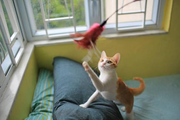 Cat in a leisure games picture id914511696?b=1&k=6&m=914511696&s=612x612&w=0&h=j9 vtwfq2c rb1g2 rbmmsbptzx19t0ugsikkvhh0fu=