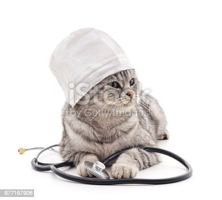 istock Cat in a medical hat with stethoscope. 877167908