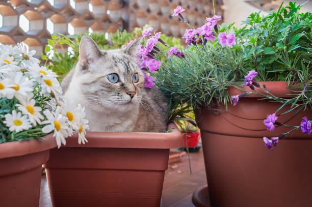 Cat in a plant pot picture id845348132?b=1&k=6&m=845348132&s=612x612&w=0&h=2jwrejn5 qm8goce7xg xddoj7 4jlza03kv9jrtdve=