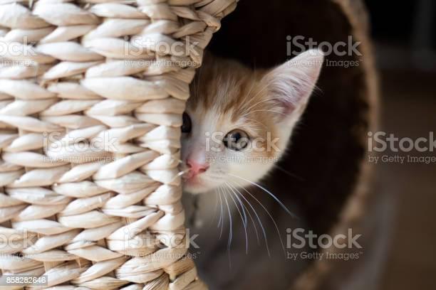 Cat in a pod picture id858282646?b=1&k=6&m=858282646&s=612x612&h=zcfd8hryqpxmeh3nsgyptxzh3bfuwkesxjabwneg628=