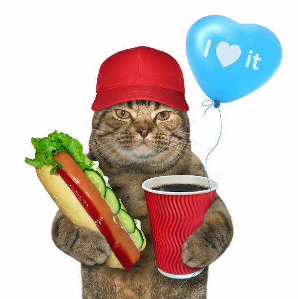 Cat in a red cap with a hot dog picture id951127290?b=1&k=6&m=951127290&s=612x612&w=0&h=otkxxogygfrlefqh7vaflce83bjldc2ozspr 3mp0ei=