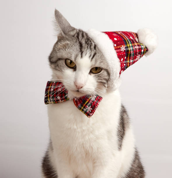 Cat in a red christmas hat and bow tie on a white background picture id1070622844?b=1&k=6&m=1070622844&s=612x612&w=0&h=dm9jirms3uyz2z digu t1 zgvt0bjfyxjwqsana9uk=