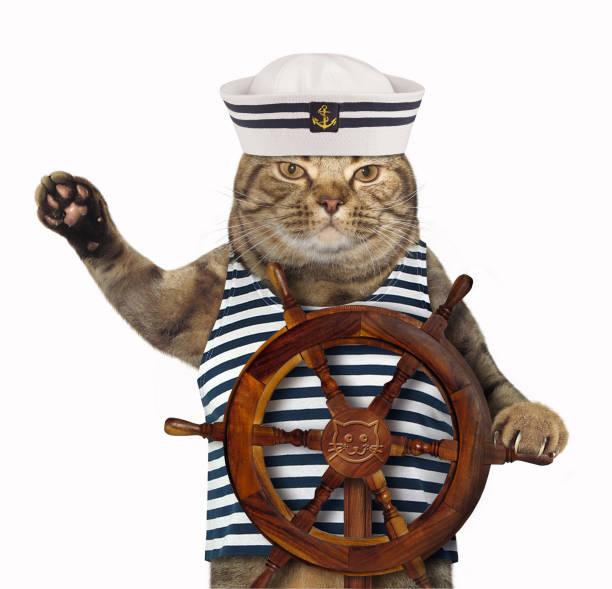 Gato em um chapéu de marinheiro - foto de acervo