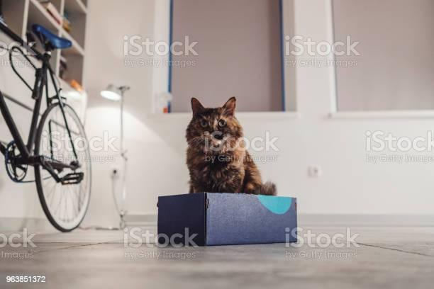 Cat in a shoe box picture id963851372?b=1&k=6&m=963851372&s=612x612&h=661fyczr45je0yqnamafz4bg1xxc5x7v2cq tsvnoiw=