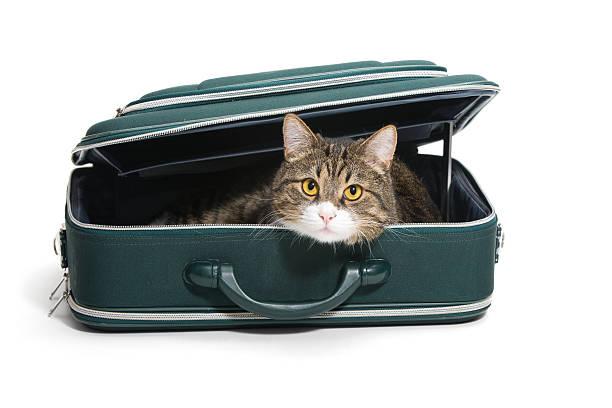 Cat in a suitcase picture id187951354?b=1&k=6&m=187951354&s=612x612&w=0&h=acgknjo6mxabokrbsk3dmgjqldcfei72d602 j2q hu=
