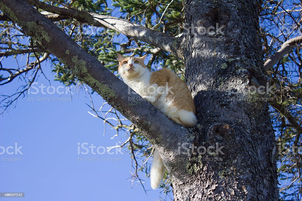 Cat in a Tree royalty-free stock photo