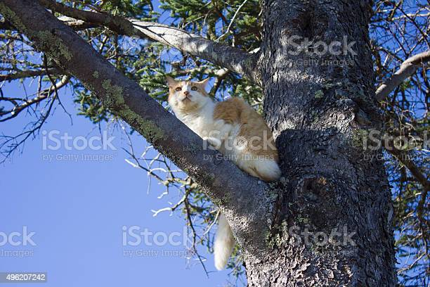 Cat In A Tree Stock Photo - Download Image Now
