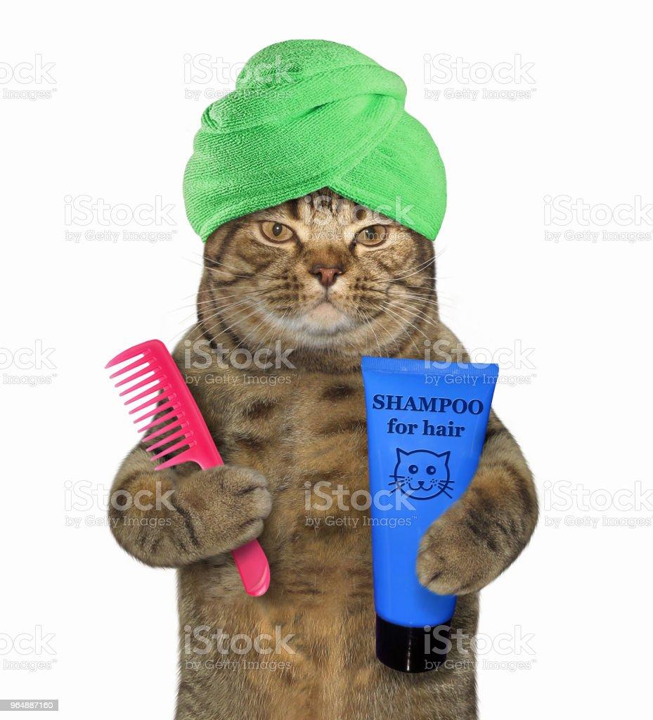 貓在頭巾舉行洗髮水和梳子2 - 免版稅乾淨圖庫照片