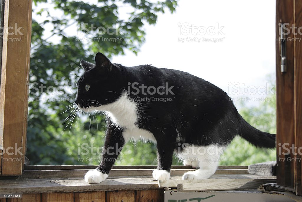 Cat in a window stock photo