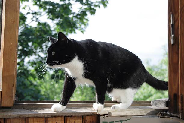 Cat in a window stock photo