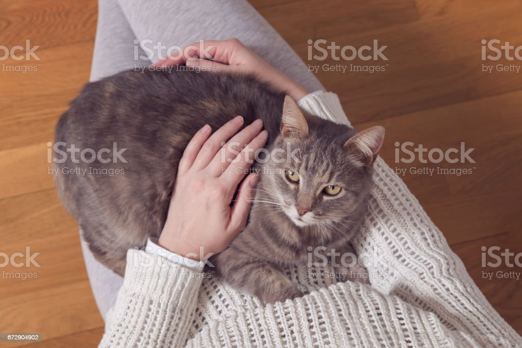 Cat in a woman's lap stock photo