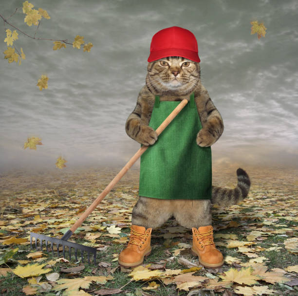 Cat in an apron with a garden rake 2 stock photo