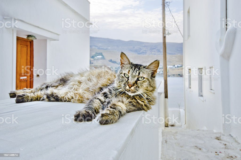 Cat in Andros stock photo