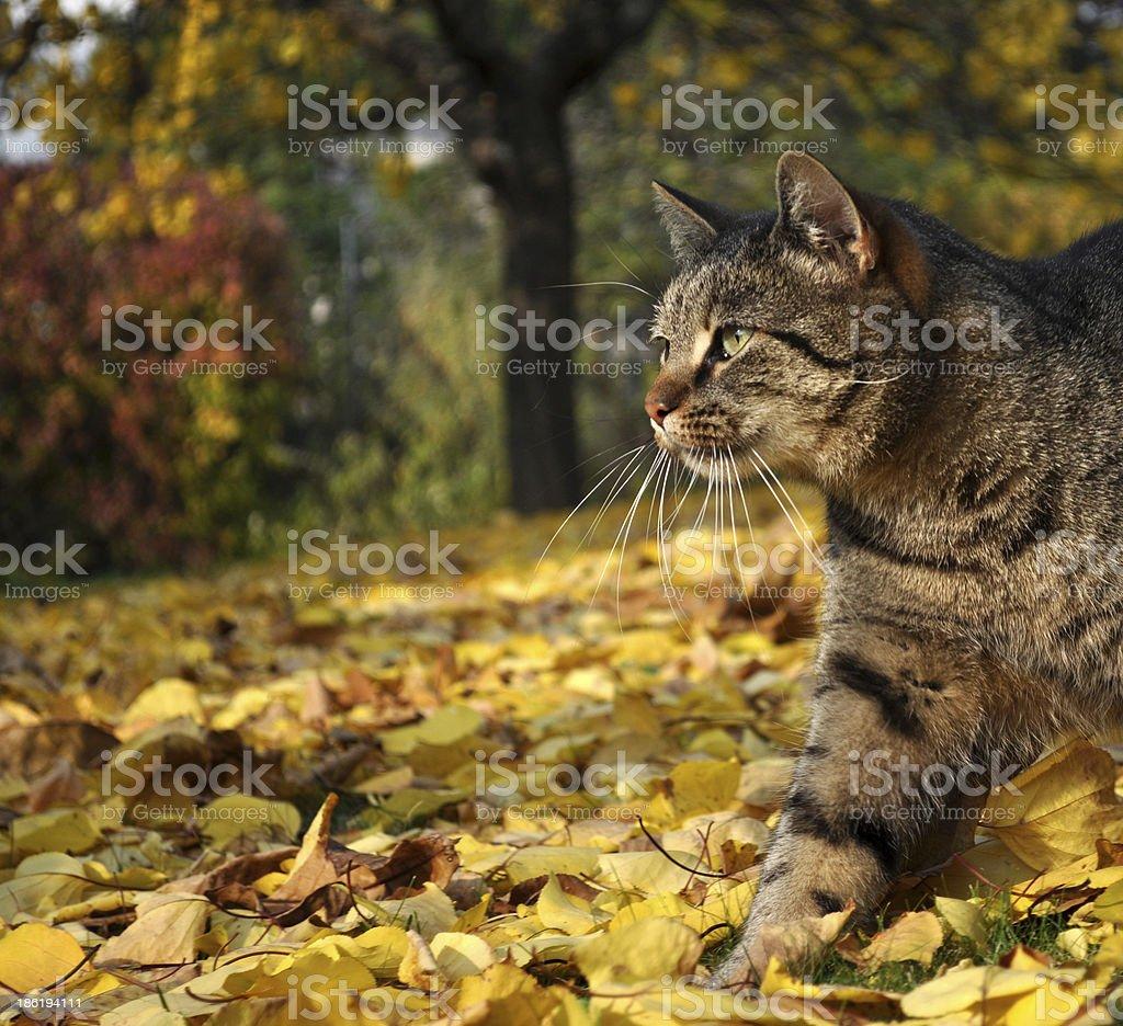 Cat in autumn garden stock photo