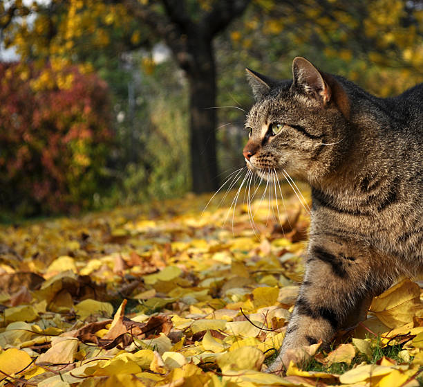 Cat in autumn garden stock photo