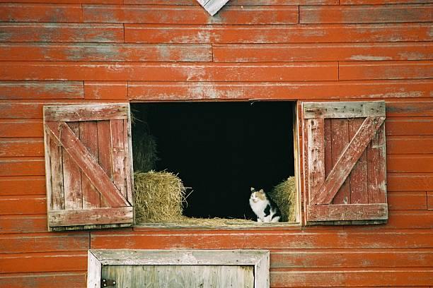 Cat in Barn stock photo