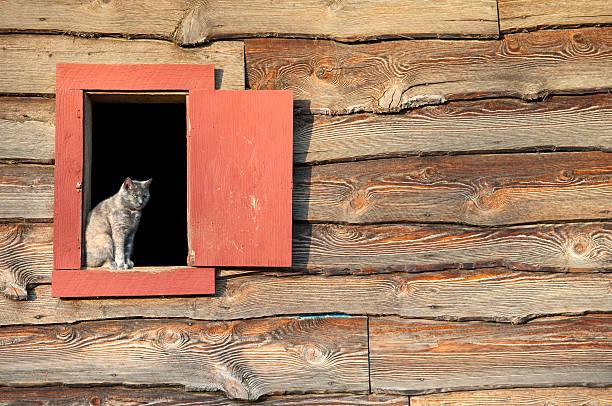 Cat in barn window stock photo