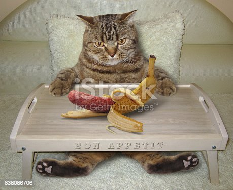 539672394 istock photo Cat in bed and banana 638086706