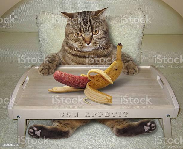 Cat in bed and banana picture id638086706?b=1&k=6&m=638086706&s=612x612&h=ojl6ko3kghfjdcehw1jzvkeoe  xpimse0nggqpdmqg=