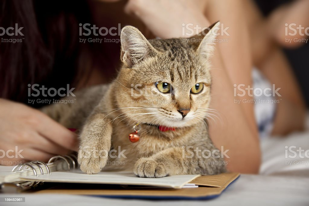 Cat in bed with woman and book
