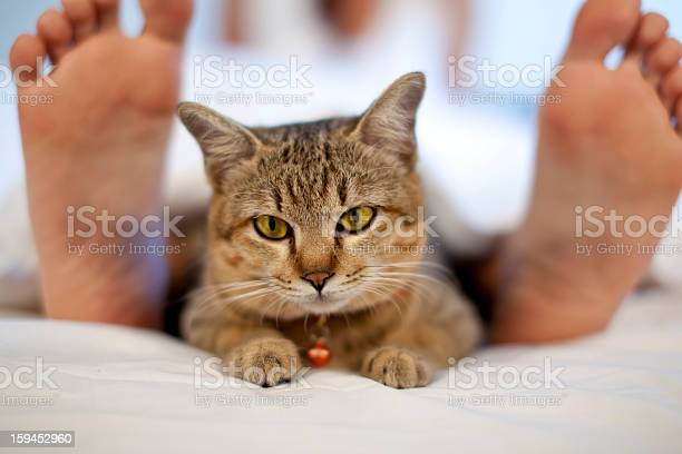 Cat in bed with woman feet picture id159452960?b=1&k=6&m=159452960&s=612x612&h=incvxcuqjp5kn iow8jfn0vwmoazfdrgx5wgriieb7g=