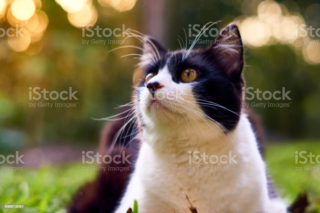 Cat in black and white colors looking up stock photo
