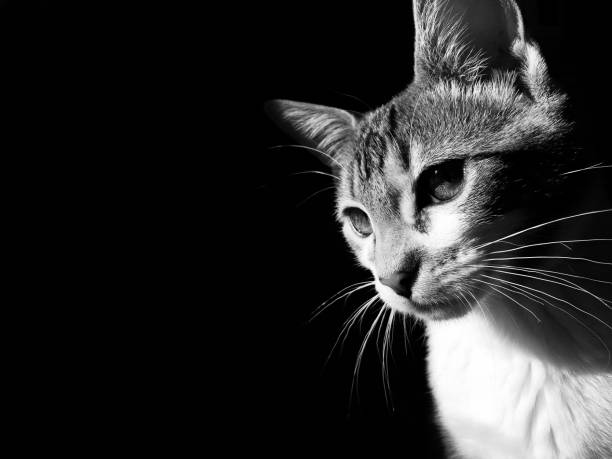 Cat in black and white stock photo