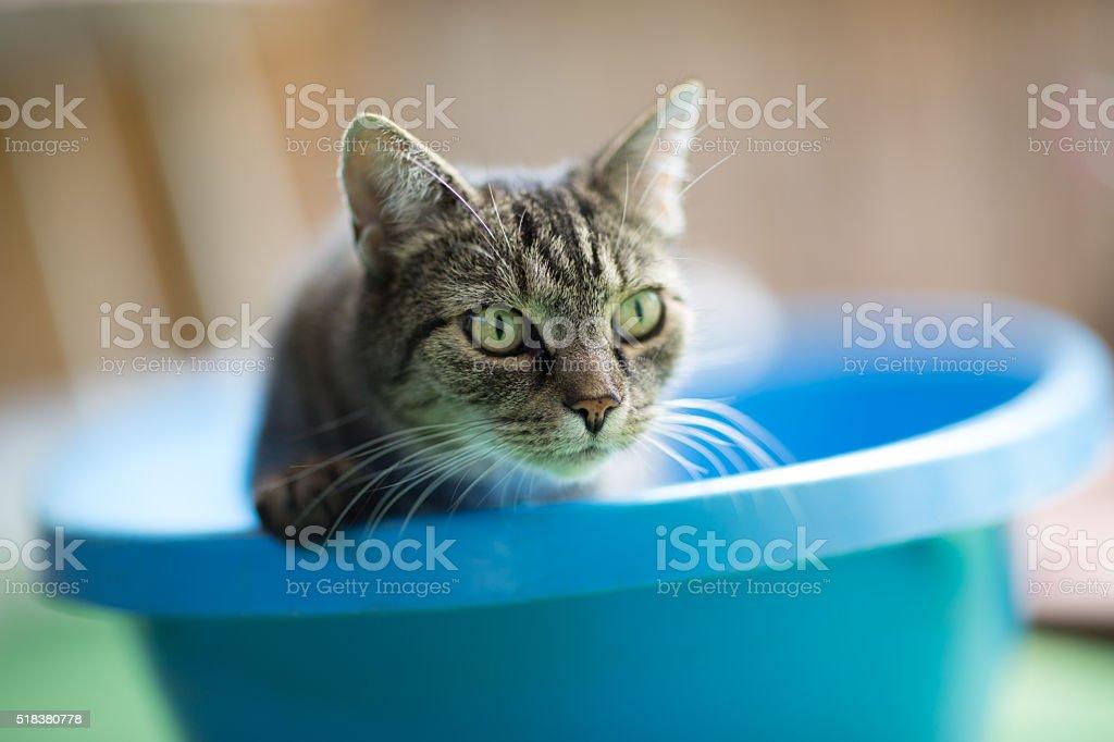 Katze in blau Badewanne – Foto