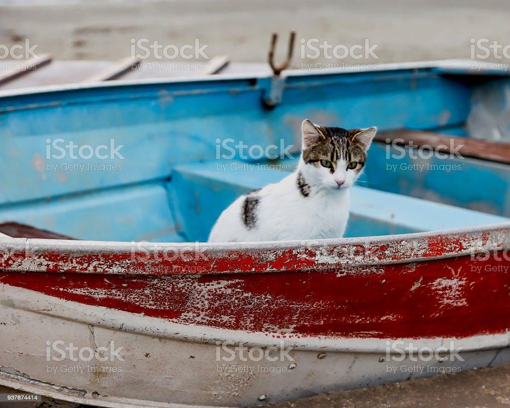 Cat In Boat stock photo